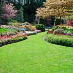 lawns-groundcovers