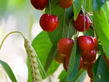 How to Grow Fruit Trees