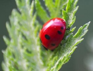 ladybug-prepare-yard-for-summer