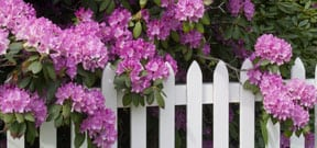 Choosing Plants for Your Yard