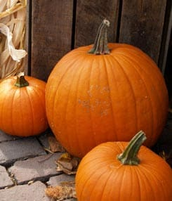 How to Grow Pumpkins & Gourds