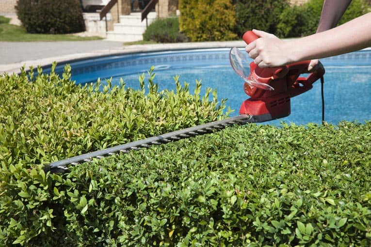 Electric hedge trimmer gives a quick and easy crew cut to an otherwise rangy hedge.