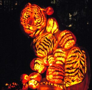 Tiger created from carved pumpkins