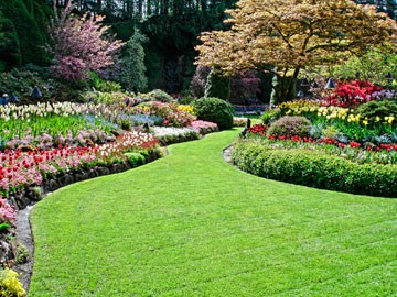 lawns ground covers