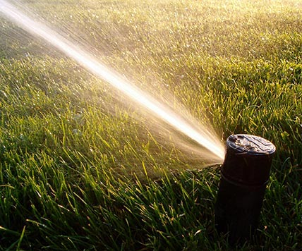 pop-up sprinkler head