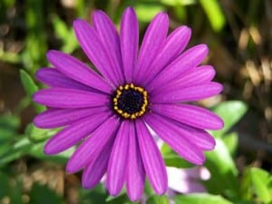 Annuals Vs Perennials Which Should You Plant