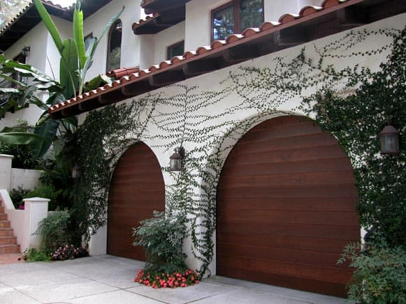growing vines stucco