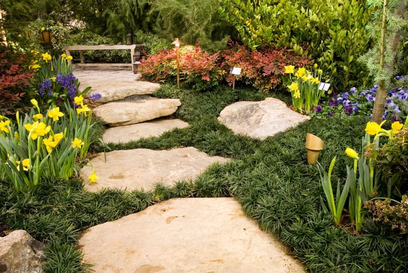 Giant flagstone steps passing through ground cover and flowers.